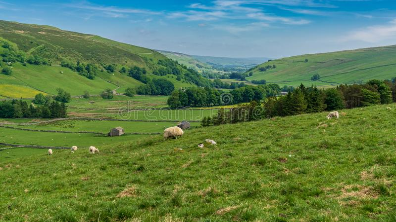Brânquia de Halton, North Yorkshire, Inglaterra, Reino Unido fotografia de stock royalty free