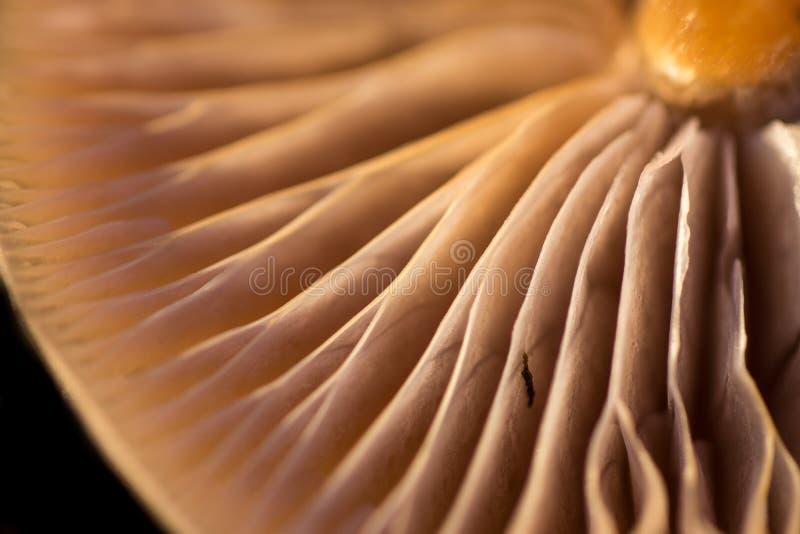 Brânquias do cogumelo imagens de stock royalty free