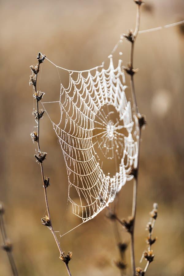 Bräcklig spindel som är netto in tidigt i en dimmig våt och kall morgon royaltyfri fotografi