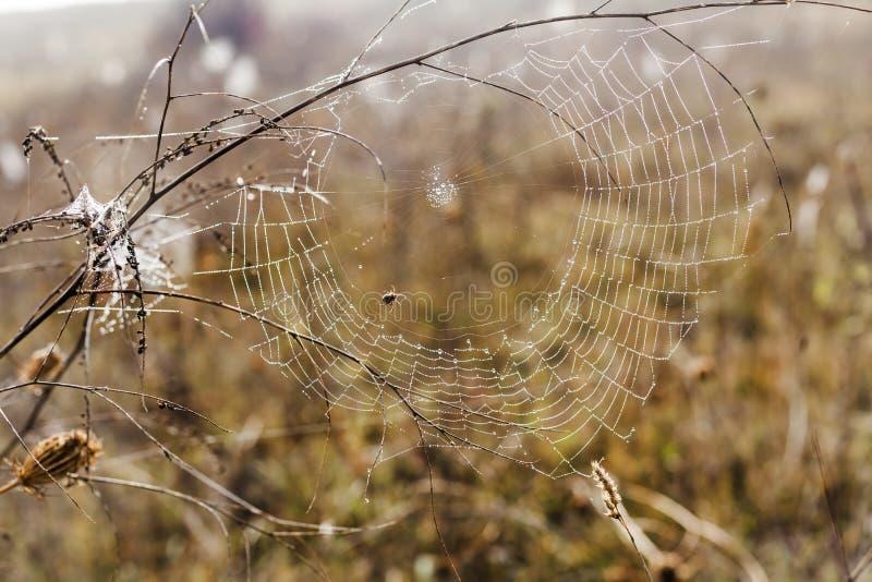 Bräcklig spindel som är netto in tidigt i en dimmig våt och kall morgon royaltyfri bild