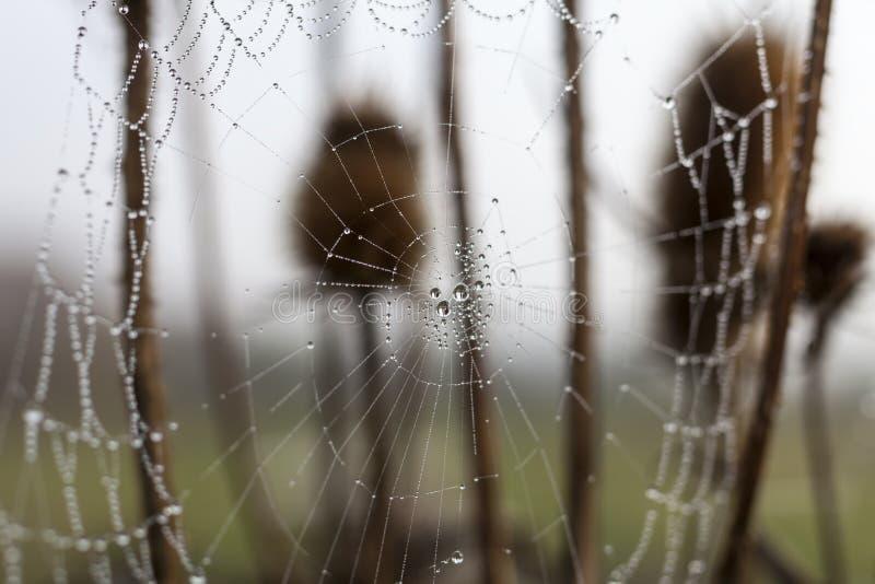 Bräcklig spindel som är netto in tidigt i en dimmig våt och kall morgon royaltyfria bilder