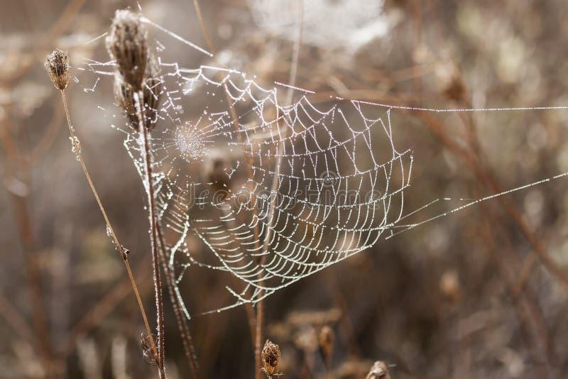 Bräcklig spindel som är netto in tidigt i en dimmig våt och kall morgon arkivfoto