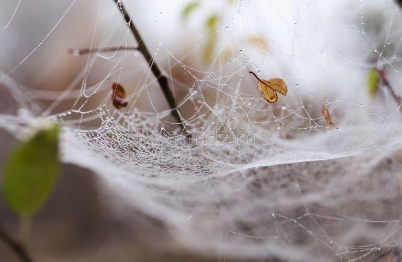 Bräcklig spindel som är netto in tidigt i en dimmig våt och kall morgon arkivbild