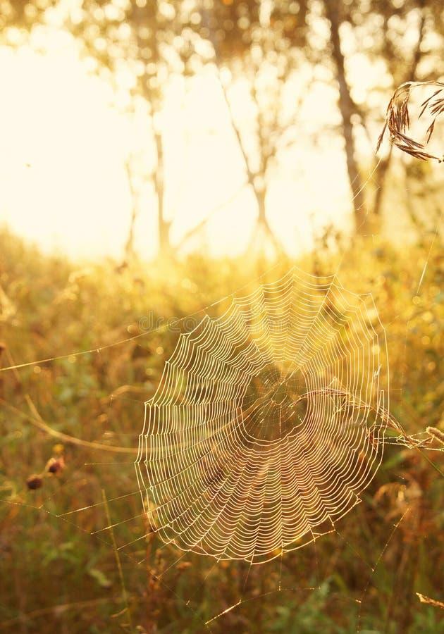 Bräcklig spindelrengöringsduk i strålar av soluppgång royaltyfria bilder