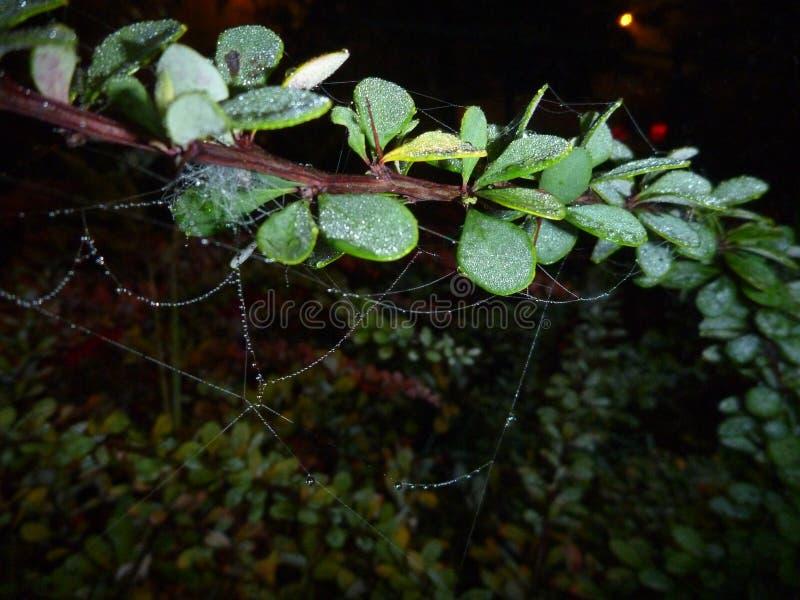 Bräcklig spindelrengöringsduk på en filial i natten royaltyfri bild