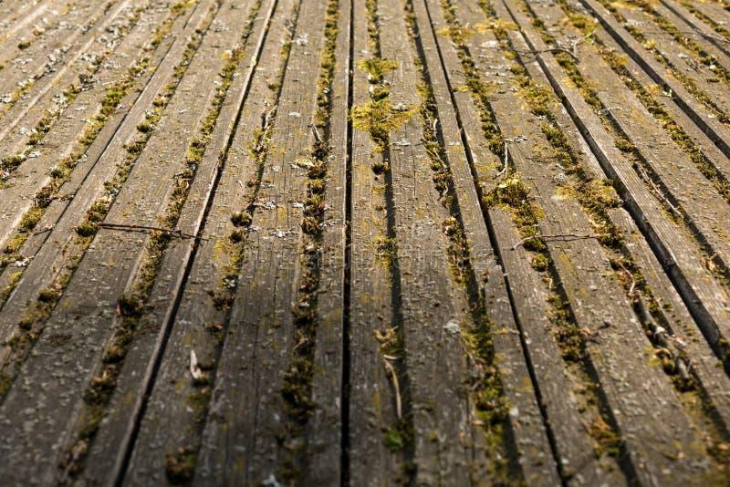 Bräden som täckas med mossa Pittoresk gammal träyttersida Textur av gamla br?den fotografering för bildbyråer