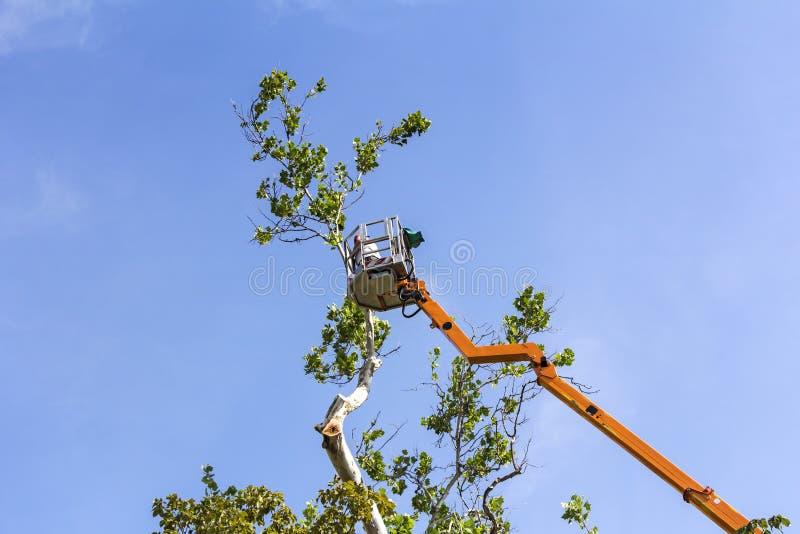 Brämträd med en chainsaw arkivbilder