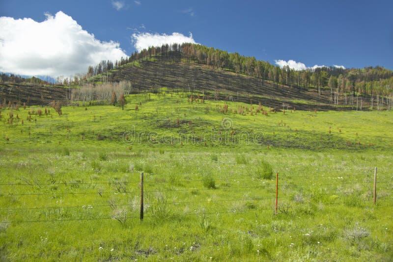 Bränd backe och ny vårtillväxt i den hundraårs- dalen, Lakeview, MT arkivfoto