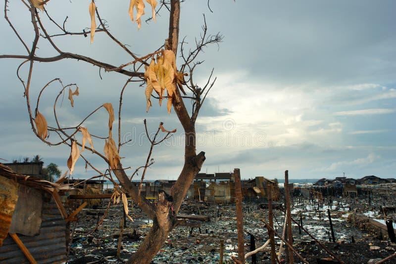 bränd tree arkivbild
