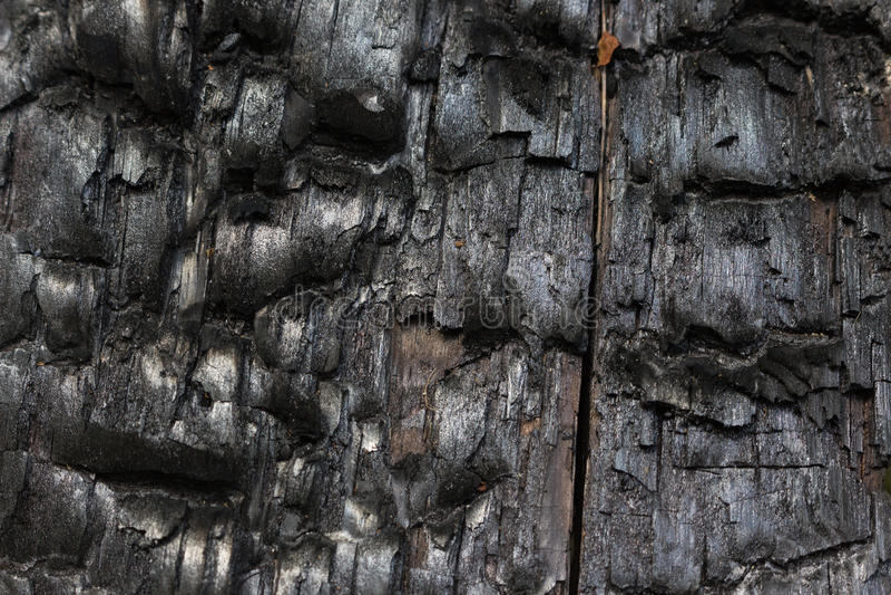 Bränd tree arkivfoto