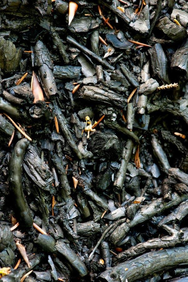 Download Bränd vegetation fotografering för bildbyråer. Bild av vedträ - 19781771