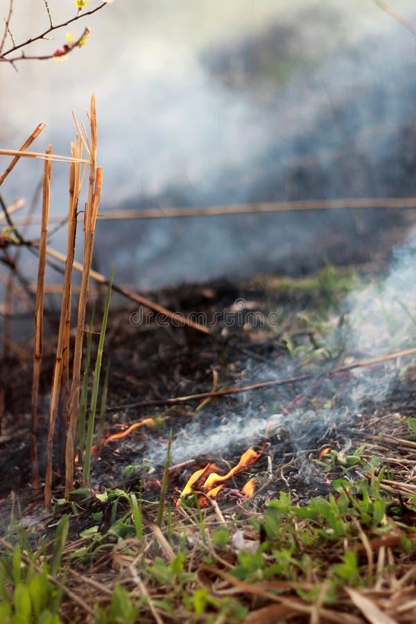 Brände des trockenen Grases im Park, alles ist im Rauche stockfotografie