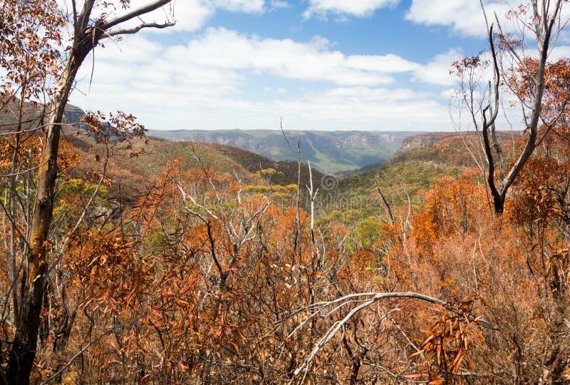 Brände till kol träd i blåa berg Australien arkivfoto