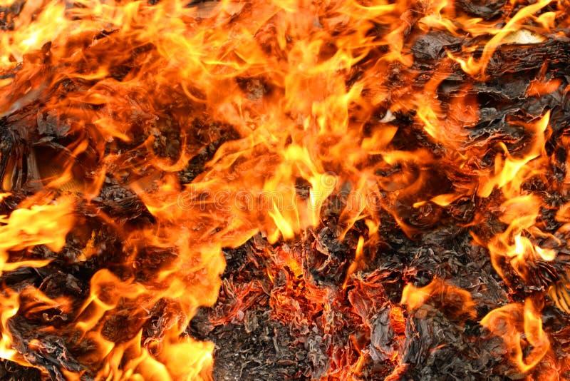 bränna royaltyfria bilder