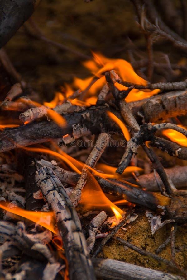 Brännande kol i branden royaltyfria bilder