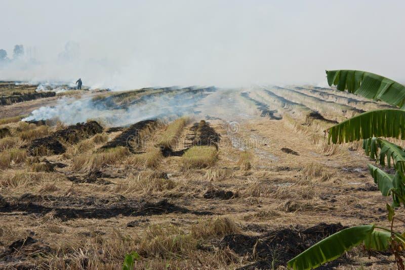 Bränning av ricesugrör. royaltyfria foton