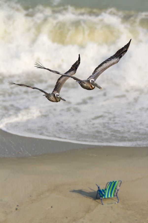 bränning för pelikan för stolshavpar royaltyfria foton