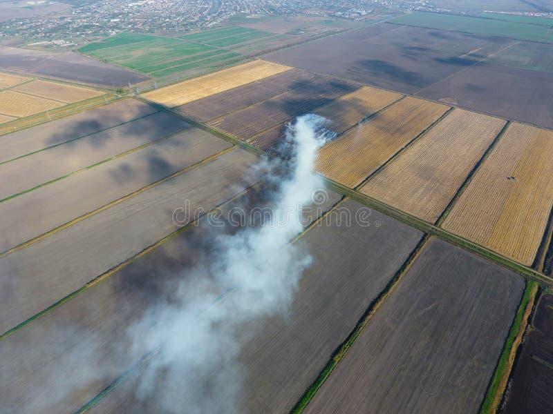 Bränningen av rissugrör i fälten Röka från bränningen av rissugrör i kontroller Brand på fältet royaltyfri fotografi