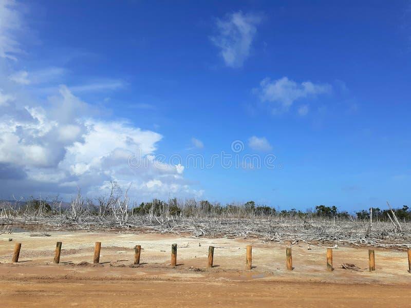 Bränt ner Forest In Las Salinas, Puerto Rico arkivfoton