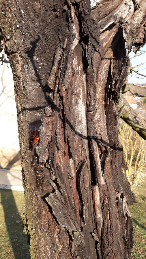 Bränt träd arkivfoto