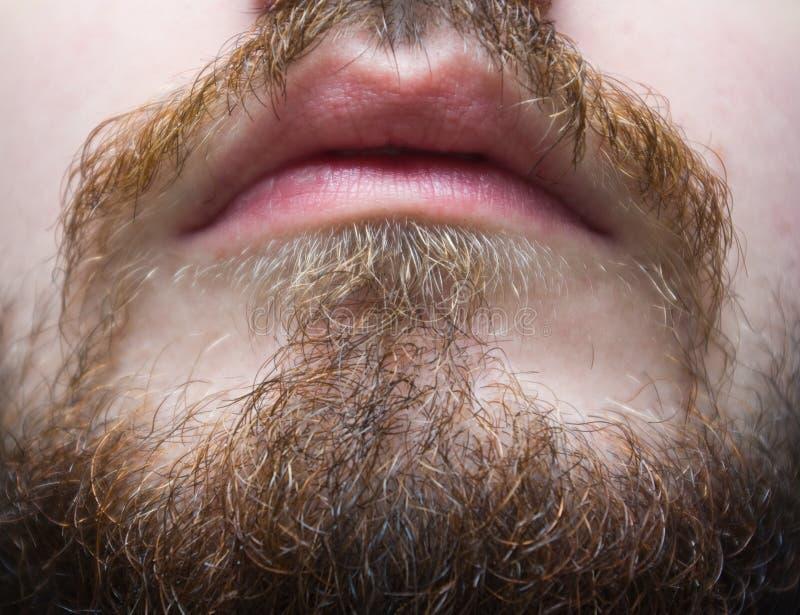 Bräunlicher Bart und Schnurrbart auf einer Mannnahaufnahme stockbilder