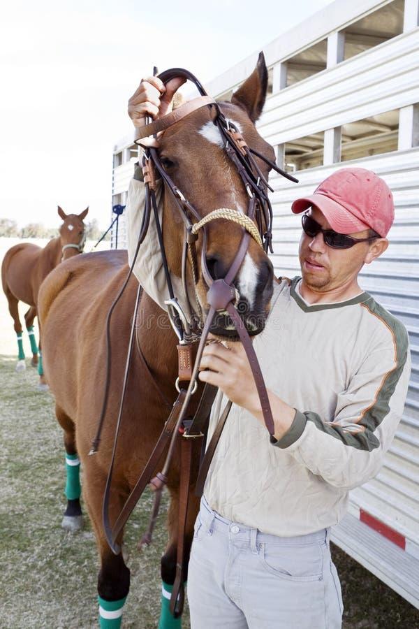 Bräutigam befestigt Zaum auf Pferd lizenzfreies stockbild