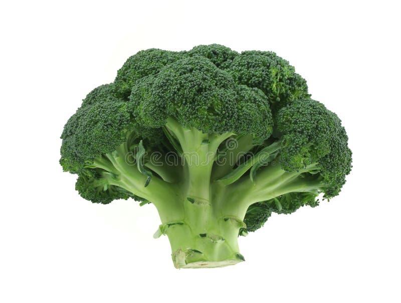 Bróculi apetitoso en fondo blanco puro foto de archivo