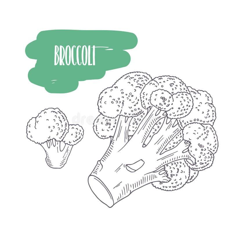 Bróculi dibujado mano aislado en blanco Bosqueje las verduras del estilo con las rebanadas para el diseño de paquete del mercado, stock de ilustración