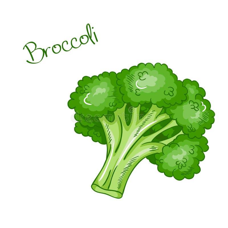 Bróculi dibujado mano fresca aislado vector de la historieta stock de ilustración