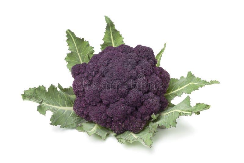 Bróculi púrpura fresco imagen de archivo