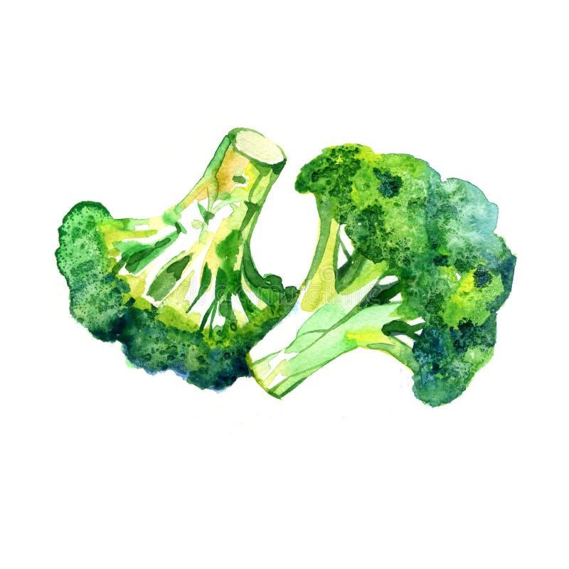 Bróculi vegetal de la acuarela aislado en un fondo blanco Pintura de la mano libre illustration