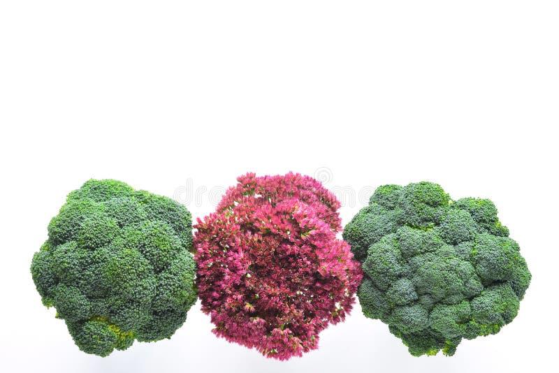 Bróculi y flores imagen de archivo libre de regalías
