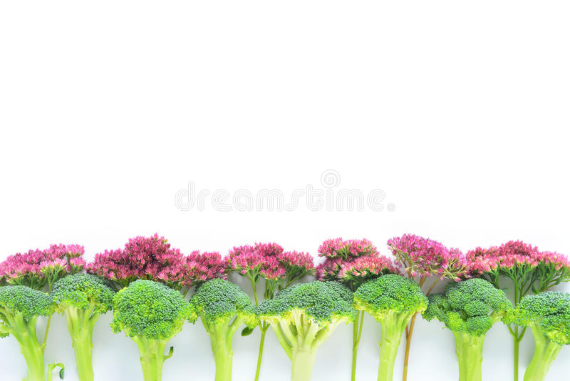 Bróculi y frontera de las flores imágenes de archivo libres de regalías