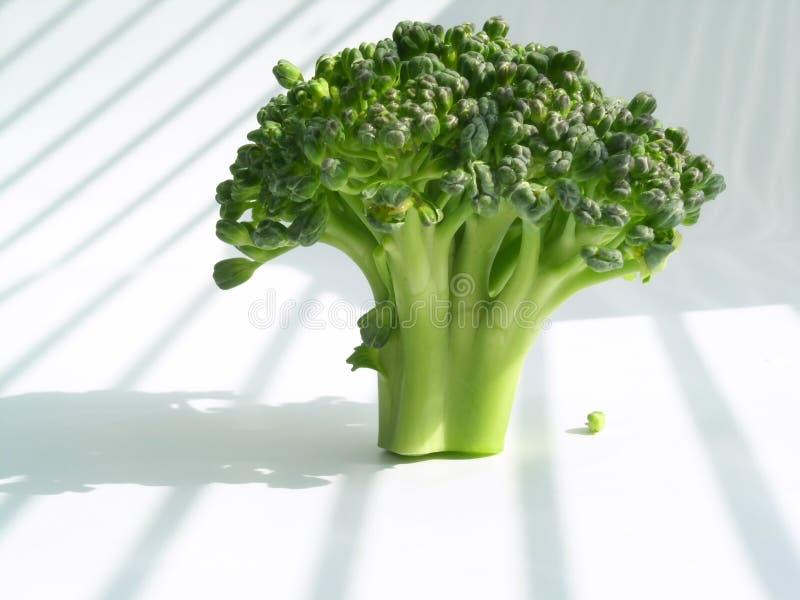 Download Bróculos imagem de stock. Imagem de closeup, nave, alimento - 113427