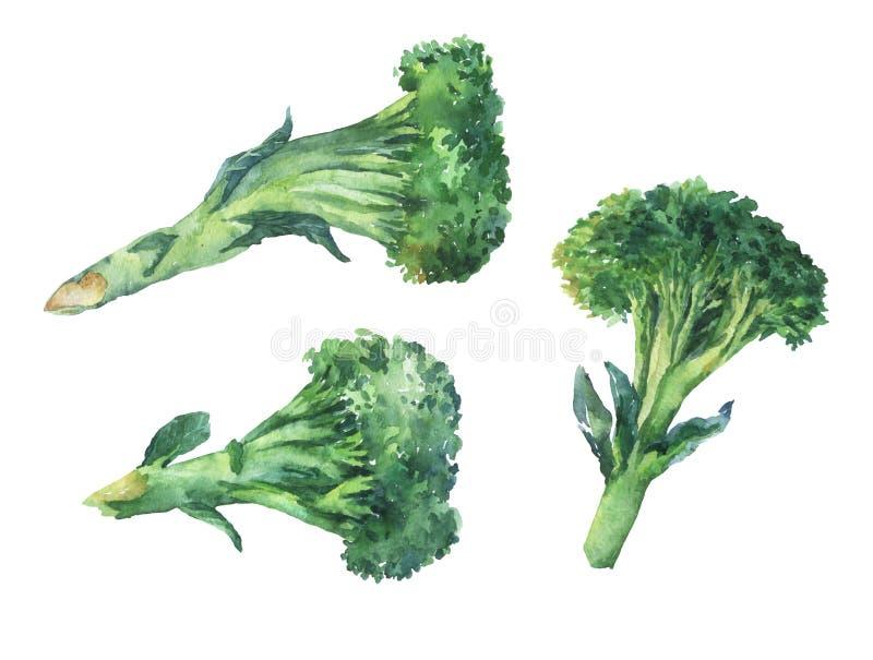 bróculos Paintin tirado mão da aquarela ilustração stock
