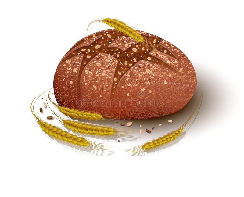bröd släntrar Spikelets av vete rye vektor illustrationer