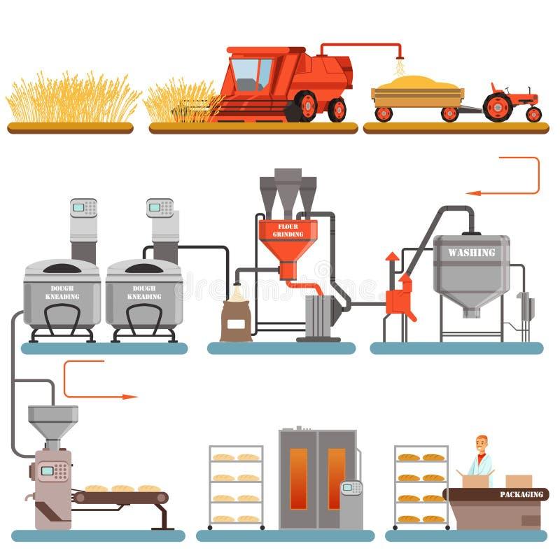 Brödproduktionsprocessetapper från veteskörd till nytt bakade brödvektorillustrationer royaltyfri illustrationer