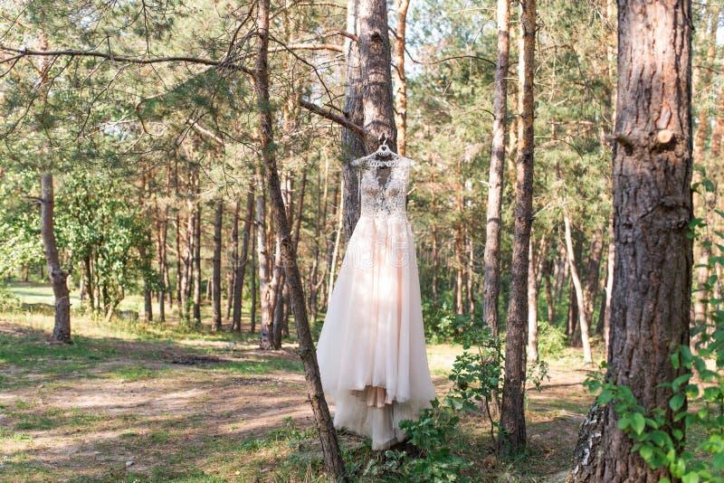 Brölloprosa färger klär på hängare på trädet i den härliga kappan för skogen arkivfoto