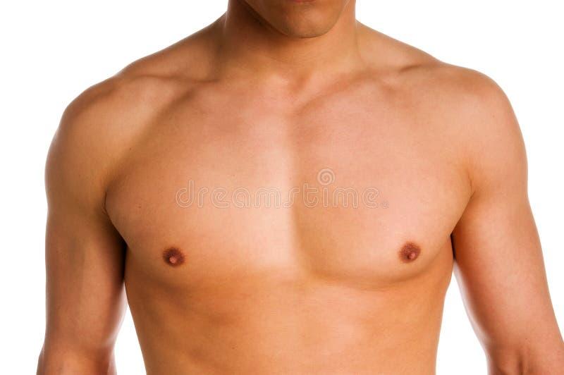 bröstkorg royaltyfri fotografi