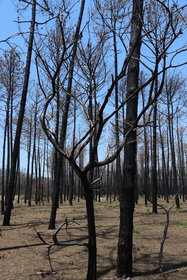 Brûlé en bas de la forêt image libre de droits