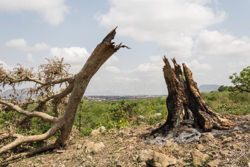 Brûlez vers le bas l'arbre photographie stock