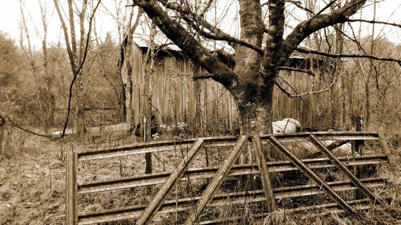 Brûlure cachée dans la forêt image libre de droits