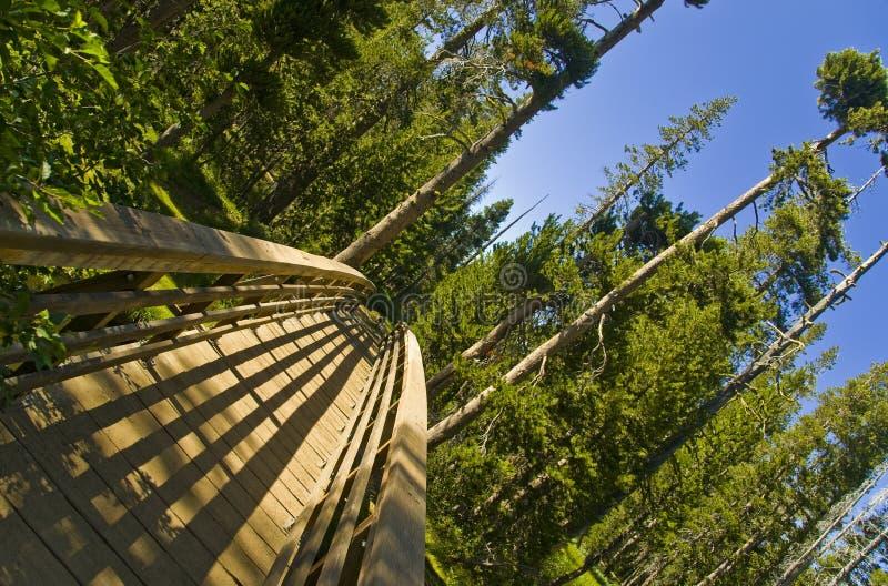 Brücke in die Wildnis lizenzfreie stockfotos