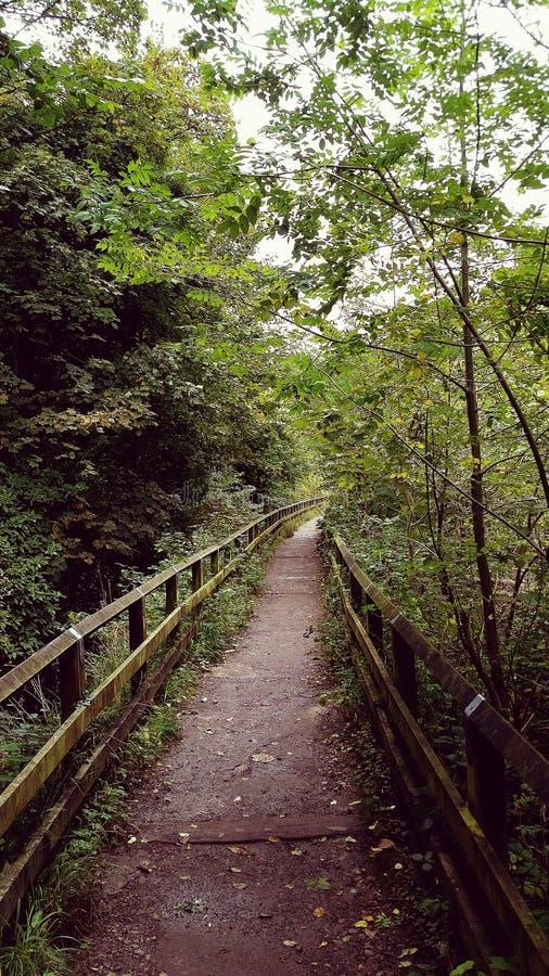 Brücke durch Natur stockfotografie