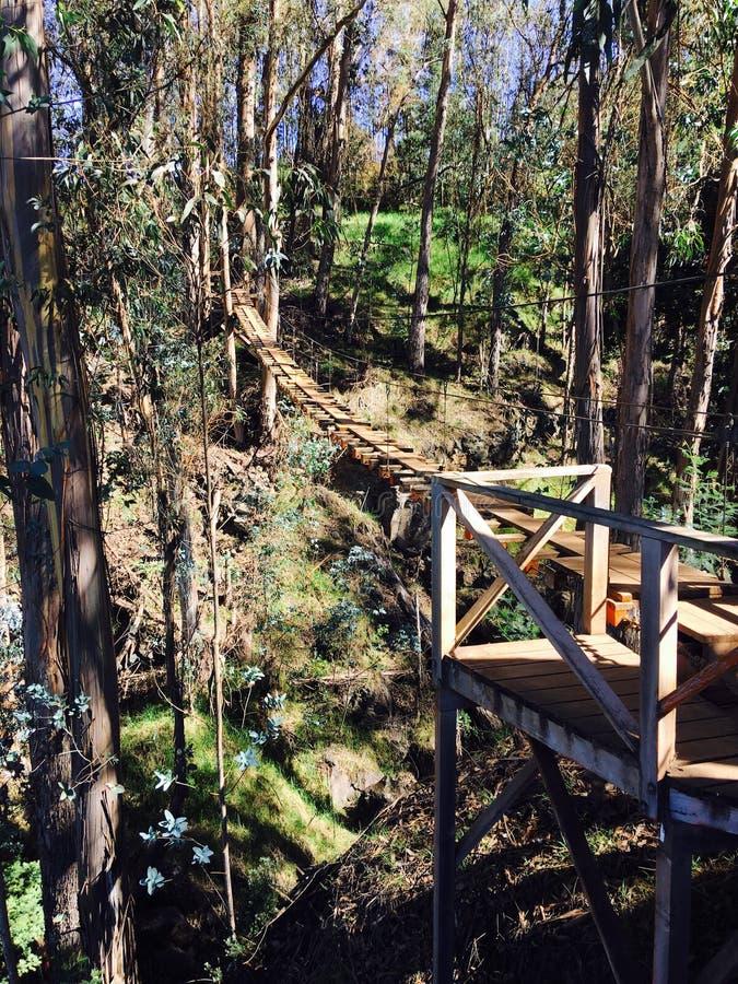 Brücke in Kula Ziplining lizenzfreie stockfotos