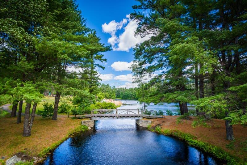 Brücke und Kiefer am Bärn-Bach-Nationalpark, New Hampshire stockfoto
