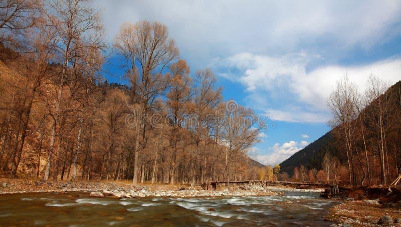 Brücken im Wald lizenzfreie stockfotos