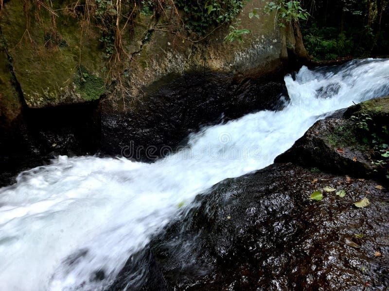 Brüllenwasser vom Wasserfall stockfotos