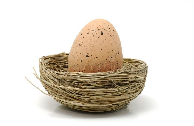 brązowe jajko fotografia stock