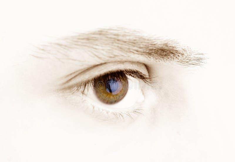 brązowe oko zdjęcie stock